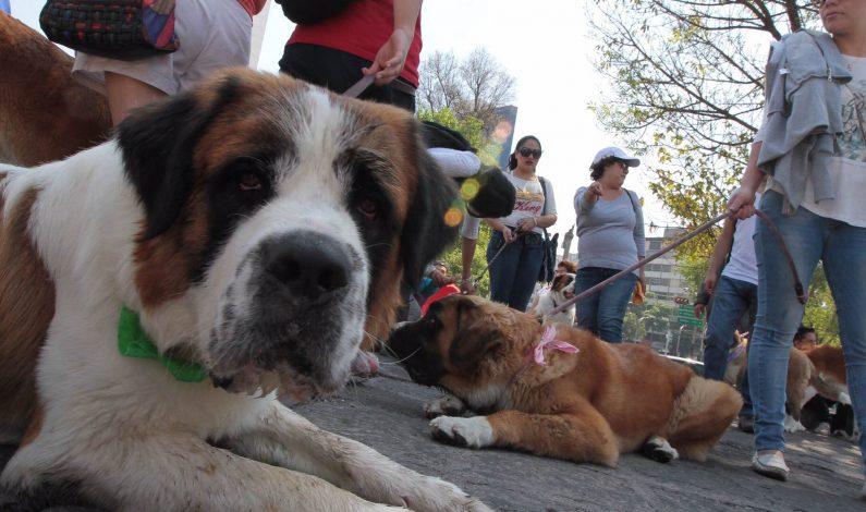 Realizarán evento de adopción de mascotas
