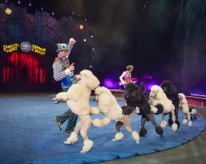 Disfruta los trucos realizados por las mascotas que forman parte del espectáculo. Foto: Cortesía