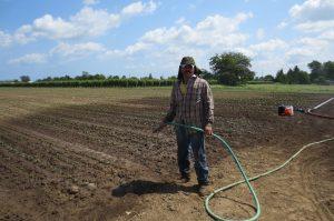Los meses de invierno o fríos es cuando se presenta el mayor trabajo en la cosecha de lechuga, principalmente. Foto: Notimex