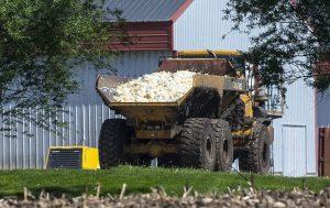 Pollos sacrificados por gripe aviar son transportados  para ser sepultados en un terreno de una granja de Rose Acre Farms, a las afueras de Winterset, Iowa. Foto: AP