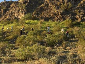 Hasta el momento no se ha determinado la superficie afectada en el municipio de Caborca, Sonora. Foto: Notimex