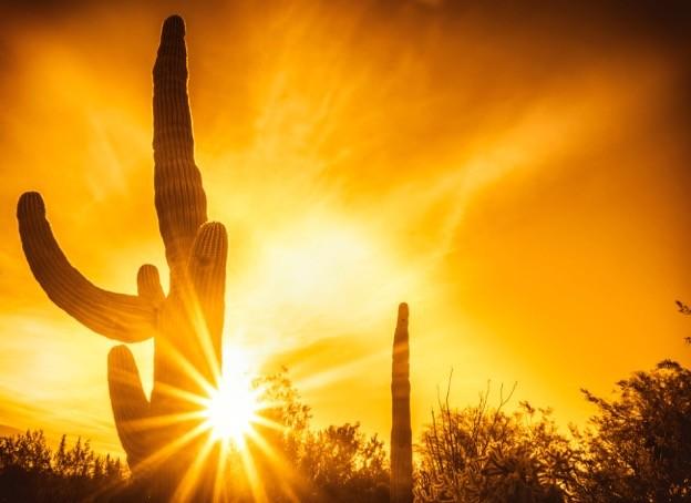Inmigrante sobrevive 13 días en desierto