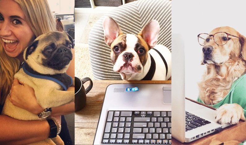 """Las mascotas se """"ponen a trabajar"""""""