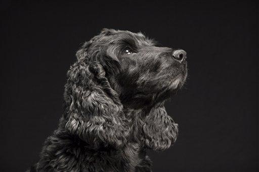 Fotógrafo de mascotas defiende a los perros negros