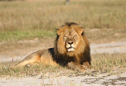 Zimbabue busca extraditar al cazador que mató a Cecil