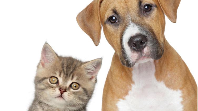 Promueven adopción de mascotas en Phoenix