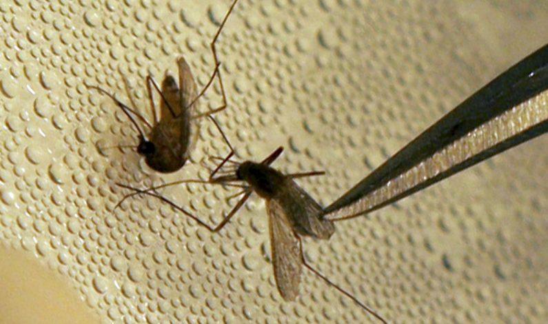 Confirman muerte de dos personas por Virus del Nilo