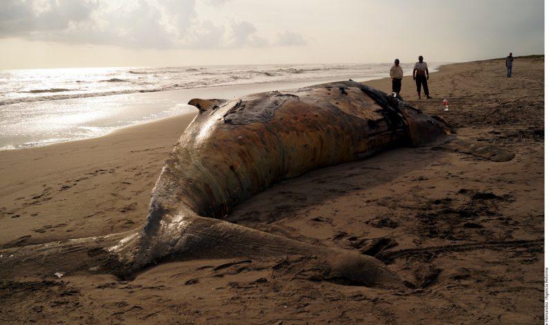 Localizan ballena muerta en Chiapas