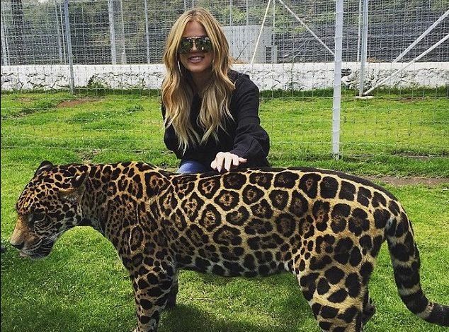 Las Kardashian visitan México por los felinos