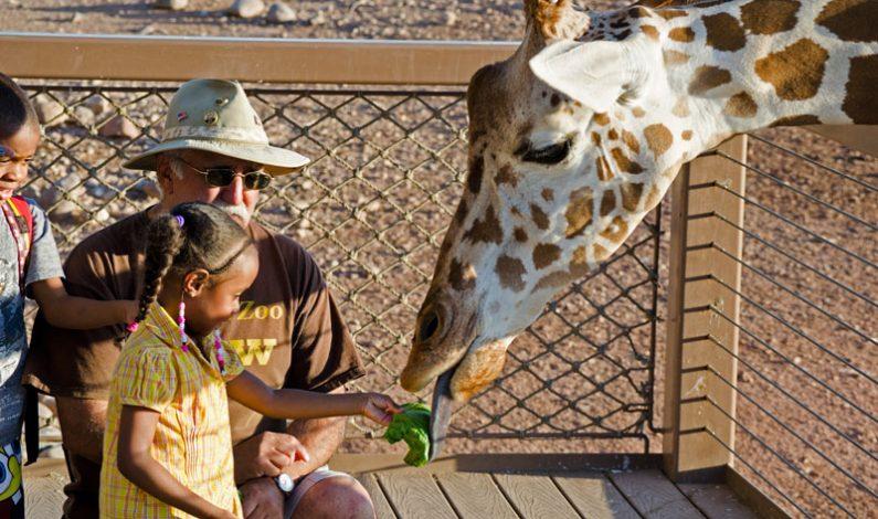 A disfrutar con los pequeños en el Phoenix Zoo