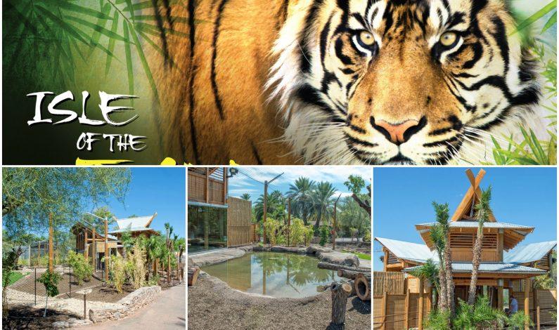 Tigres de Sumatra del Phoenix Zoo estrenan nuevo hogar
