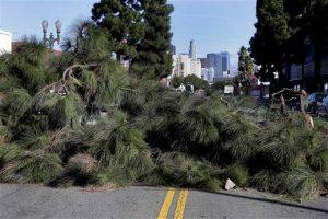 Un gran árbol yace a través de una calle después de ser derribado por los fuertes vientos cerca del centro de Los Ángeles. Foto: AP