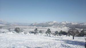 La nieve embelleció las áreas boscosas y caminos de la elevada zona rural. Foto: Cortesía
