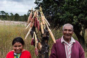 Sunú, una historia de Teresa Camou, que habla de la amenaza que representa para México el cultivo de maíz transgénico. Foto: Cortesía Ambulante
