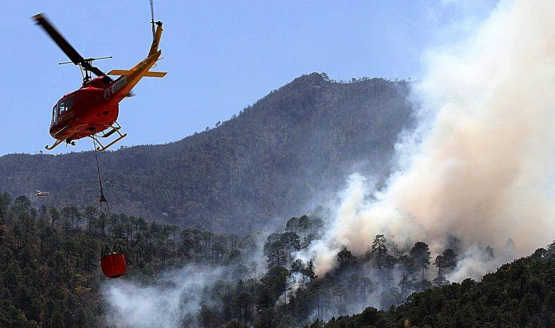 Guerrero y Coahuila, los más afectados por incendios forestales
